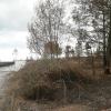 Fogos florestais: a prevenção começa pela limpeza das matas