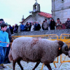 Marrada de carneiros e luta de bois cumprem tradição em Moimenta da Beira