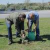 ESAV planta clones de cardo à porta de casa