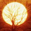 Alterações climáticas mobilizam CIM Viseu Dão Lafões