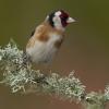 «Cinclus» distingue melhor fotógrafo de imagem da natureza