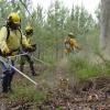 Gabinete Técnico Florestal em funcionamento na CIM Viseu Dão Lafões
