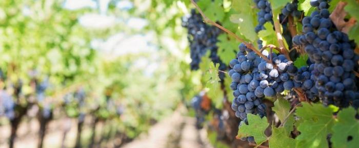 Vinhos do Dão reforçam notoriedade no mercado internacional