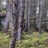 Vídeos sensibilizam munícipes de Tondela para a preservação da floresta